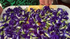 'Sốt xình xịch' hoa đậu biếc giá bạc triệu, có phải thần dược?