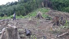 Bán rừng phòng hộ, trưởng ban quản lý và nguyên phó ban bị khởi tố