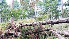 Thực hiện kết luận của Thanh tra Chính phủ tỉnh Lâm Đồng chấm dứt dự án sân golf