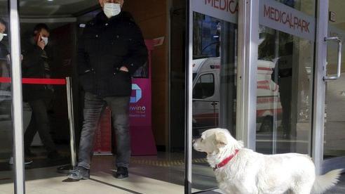 Chó đợi chủ bên ngoài cửa bệnh viện mỗi ngày