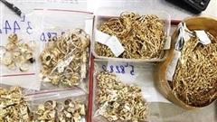 Quảng Nam: Thợ kim hoàn trộm gần 500 lượng vàng của chủ