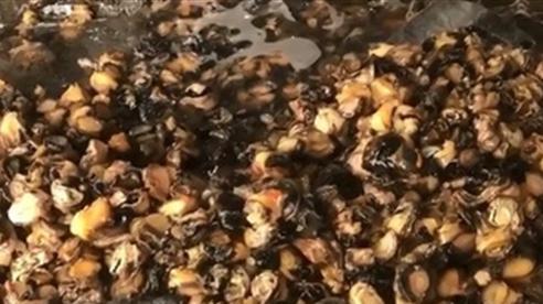 Dùng hóa chất ngâm thịt ốc bươu vàng: 'Thật kinh khủng'