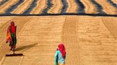 Châu Phi chịu sức ép giá cả khi châu Á thắt chặt nguồn cung gạo