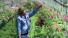 Hỗ trợ nông dân phát triển kinh tế tập thể