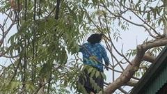 Cụ bà thoăn thoắt leo cây hái quả, biết được số tuổi càng khiến nhiều người thán phục