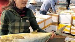 Ngư dân Hà Tĩnh trúng đậm 'lộc biển', thu về hơn 600 triệu đồng