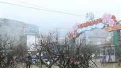 Cơn biến động của đào rừng Tết Tân Sửu 2021
