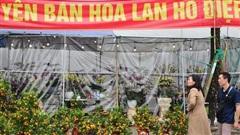 Chợ hoa xuân Mỹ Đình nhộn nhịp khách đi sắm Tết