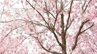 Học 5 bí quyết giảm cân cực nhanh của phụ nữ Nhật, tự tin đón Tết