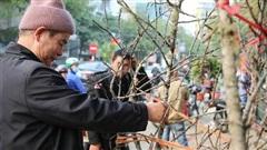 Đào Sơn La dán tem xuất xứ 'đổ bộ' Thủ đô Hà Nội