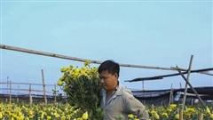 Thời tiết đẹp, dân trồng hoa Tây Tựu dự tính thu lãi trăm triệu vụ Tết