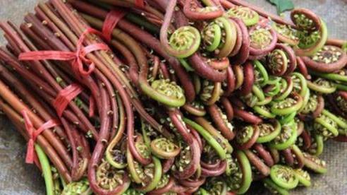 Đây là loại rau chứa chất gây ung thư cực mạnh mà WHO cảnh báo, người Việt nên cẩn trọng kẻo ăn nhầm