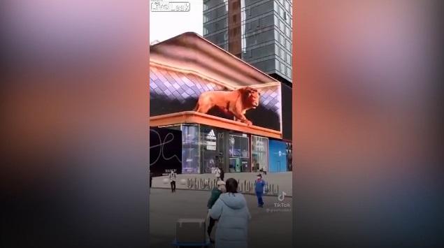 """Sư tử như thật lao ra từ màn quảng cáo 3D khiến người đi đường một phen """"hú vía"""""""