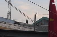 Đàn khỉ hoang 'đại náo' khu dân cư ở quận 12, TP HCM