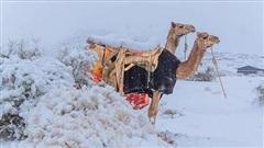 Sa mạc Sahara bất ngờ xuất hiện tuyết rơi, phủ trắng các cồn cát