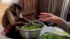Việc gì cũng đến tay khỉ