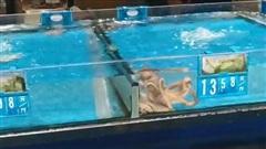 Tủi thân phận nhà nghèo, chú bạch tuộc bơi sang bể đắt tiền để 'đánh đu' vào giới thượng lưu