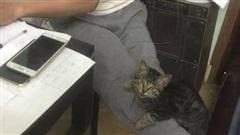Con gái định nuôi mèo, bố dọa 'ném ra đường' và cái kết không thể ngờ mỗi sáng ngủ dậy