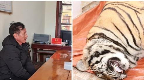 Vụ phát hiện hổ nặng 250kg trong nhà dân ở Hà Tĩnh: Chủ nhân đã ra đầu thú