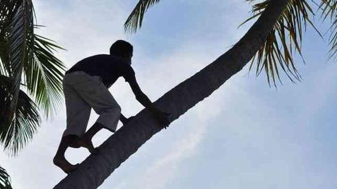 Giữa đêm mưa, gia đình sợ hãi nghe tiếng cười trẻ con phát ra từ thân cây dừa phải cầu cứu thầy trừ tà, vài ngày sau ngỡ ngàng khi biết nguồn cơn