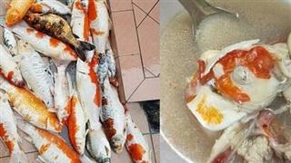 Đàn cá koi lăn ra chết, nữ chủ nhân vì tiếc tiền nên quyết định đem tất cả đi... nấu súp, pha xử lý khiến dân mạng 'khóc thét'