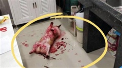 Tìm chó đi lạc, chàng trai kinh hãi phát hiện con vật đang nằm im trong vũng máu cạnh con dao nhưng sự thật đằng sau khiến ai cũng ngã ngửa