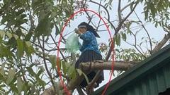 Cụ bà U70 trèo cây hái quả thoăn thoắt, ai nhìn qua cũng phải ngả mũ: 'Gái 18 cũng thua ngoại'