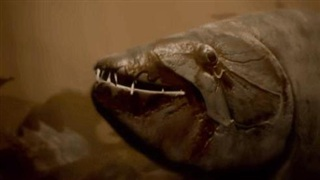Nhốt con cá dài 3cm cùng lồng kính với 'cỗ máy róc thịt' Piranha: Kết quả nằm ngoài sức tưởng tượng của con người!