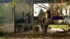 Video: Hoảng hồn khi phát hiện hổ mang chúa dài 4m trong sân
