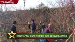 Sơn La cấp tem chứng nhận đào rừng do người dân trồng