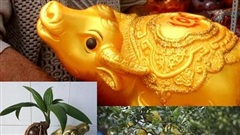 Hàng độc trâu vàng 'cõng' cây dừa, bưởi, thay heo đất giữ tiền săn khách Tết này