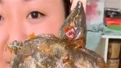 Netizen thế giới sốc nặng vì màn mukbang nhai rùa nguyên con