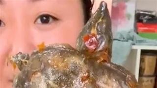 Netizen thế giới sốc nặng vì màn mukbang nhai rùa nguyên con, yếu tim đừng xem vì kinh dị quá sức chịu đựng!