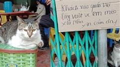 Con mèo 'khó ở' ngồi chễm chệ trước quán ăn khiến chủ phải viết ngay biển cảnh báo, ai đọc cũng buồn cười