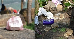Cạn lời với tình trạng vứt rác đổ bộ lên bán đảo Sơn Trà (Đà Nẵng): Đi chơi đừng để quên ý thức!