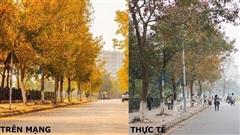 Ảnh thực tế khác đến 'ngỡ ngàng' của con đường lá phong đỏ đẹp như xứ Hàn ở Hà Nội đang được nhiều bạn trẻ check-in