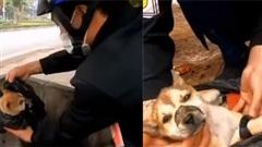 Clip: Giải cứu chú chó nhỏ bị chủ cũ lấy băng keo buộc mõm, nhét vào túi ni lông vứt vào thùng rác