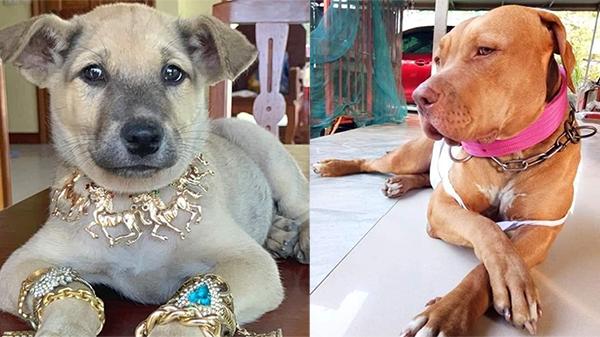 Chú chó được 'con sen' trang bị đồ để đón Tết, biểu cảm sang chảnh bên bộ trang sức 'siêu ngầu' khiến nhiều người bật cười nghiêng ngả