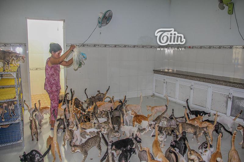 Gặp lại 'người đàn bà điên' cưu mang mèo hoang ở Sài Gòn: Chấp nhận đơn độc, cắt đứt mọi liên lạc với người thân 4