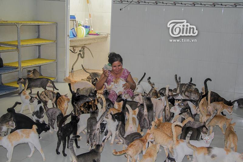 Đàn mèo hơn 200 con được cho ăn đúng bữa