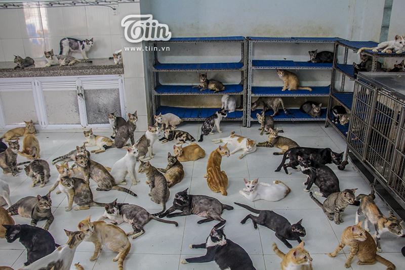 'Đảo mèo' là có thật...