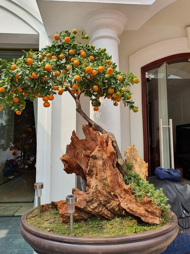 Vào dịp Tết vừa qua, sân vườn nhà Tuấn Hưng được trang trí đầy đủ cả cây đào, mai, quất