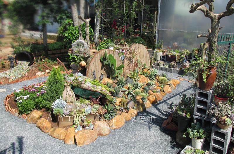 Mê mẩn với khu vườn ngập sắc hoa được tạo từ đống đồ ve chai của bà mẹ 8X Lâm Đồng 6