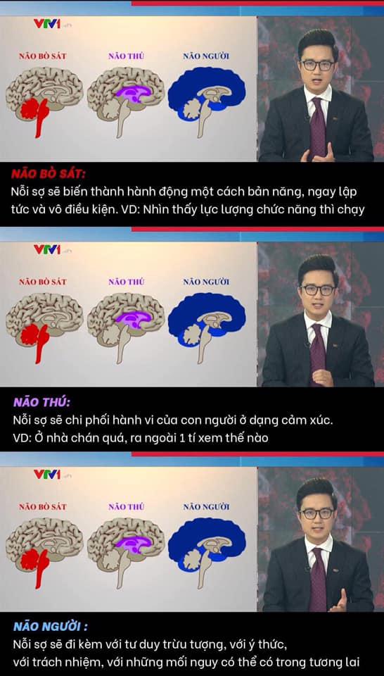 Dựa trên cấu tạo não người, VTV có những ví dụ điển hình liên quan đến các trường hợp vi phạm giãn cách ở Hà Nội thời gian gần đây