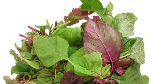 Loại rau 'trường thọ' tốt cho sức khỏe mọc hoang đầy vườn, không phải ai cũng biết