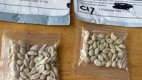 Mỹ: Nhiều người dân nhận được các gói hạt giống bí ẩn đến từ TQ, giới chức địa phương 'lo sốt vó'
