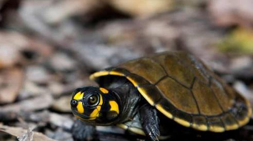 Thực trạng buôn bán động vật tại rừng Amazon