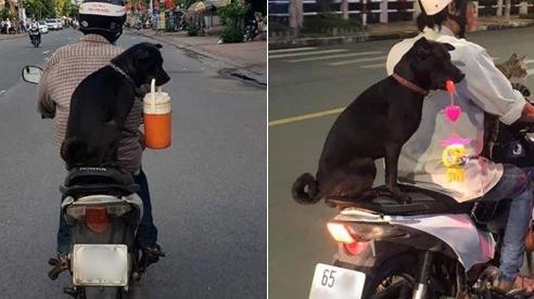 Chú chó dễ thương sáng mang cặp lồng cơm đi làm, tối lại mang lồng đèn Trung thu đi chơi với người cha lam lũ