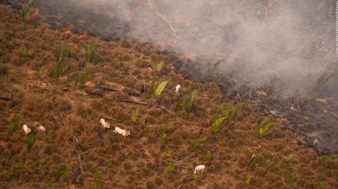 Rừng Amazon đang dần tới điểm cực hạn