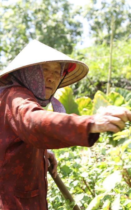 Cụ bà gần 90 tuổi vẫn phăng phăng đi cấy, trồng rau khiến giới trẻ xách dép' đuổi theo: 'Các cháu chưa chắc đã bằng tôi, còn khoẻ tôi còn làm'